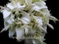 bouquet da sposa (45)