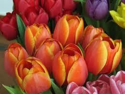 I fiori di Marzo