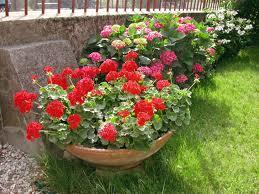 I fiori d'aprile