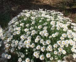 I fiori d 39 aprile fiorista roberto di guida for Fiori perenni da esterno pieno sole