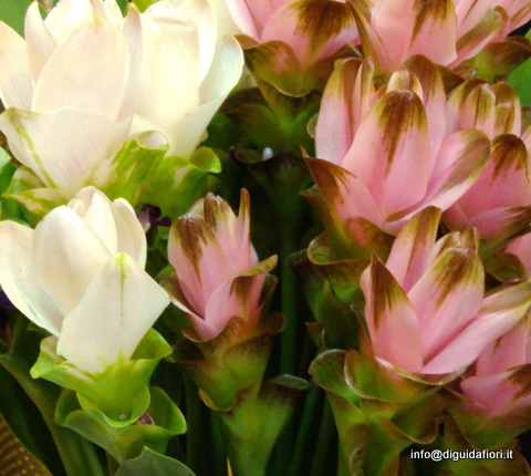 I fiori di giugno luglio e agosto matrimonio estivo for Fiori di agosto