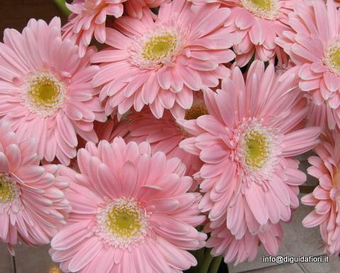 I fiori di giugno luglio e agosto matrimonio estivo for Fiori gerbere