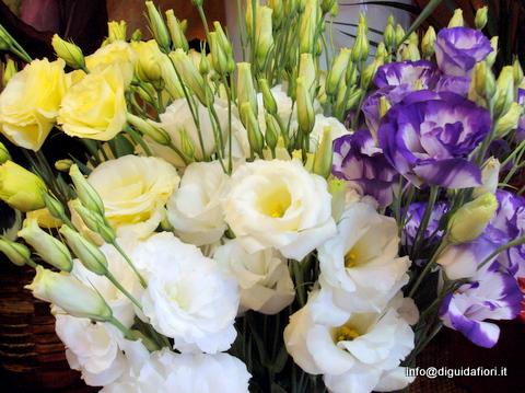 Help che fiori ci sono a settembre prima delle for Nomi di fiori bianchi