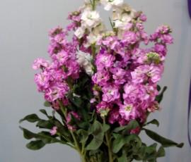 fiori di viole a ciocca