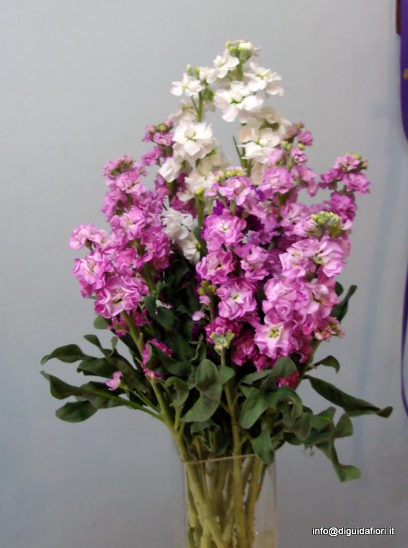 I fiori di settembre e ottobre